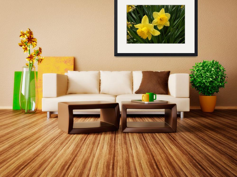 """Two Yellow Daffodils Photo&quot  (2009) by catnip009"