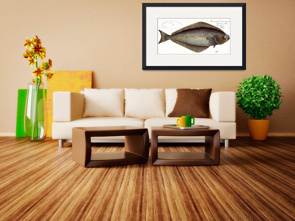 """""""Halibut (Pleuronectes Hippoglossus)&quot  by fineartmasters"""