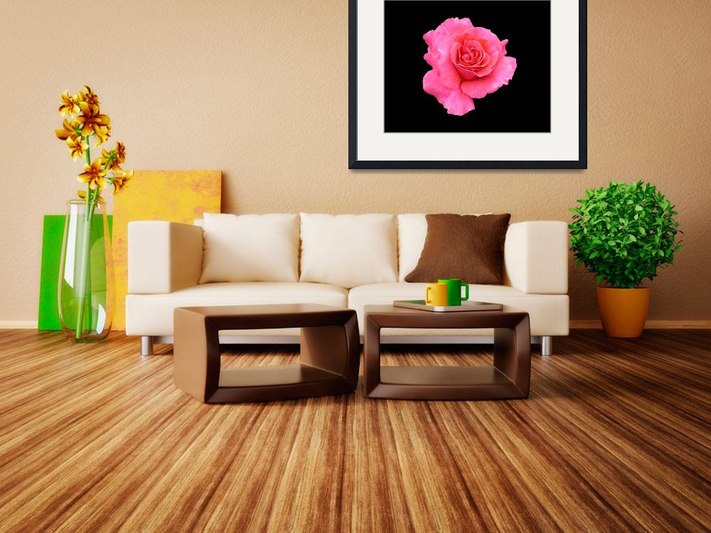 """""""Habitat for Humanity Rose&quot  by peterchan"""