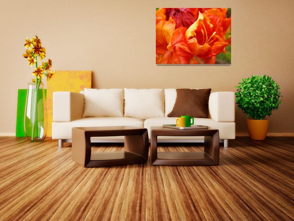 """""""Orange Rhodie Flower art print Rhododendron Macro&quot  (2010) by BasleeTroutman"""