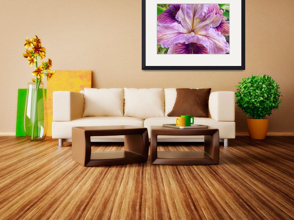 """Iris Flower Purple Irises Floral art prints&quot  (2011) by BasleeTroutman"