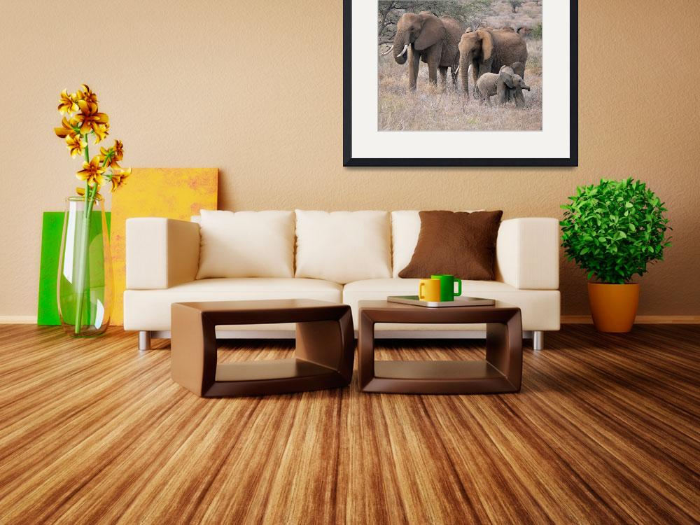 """""""Elephant Family&quot  (2007) by stockphotos"""
