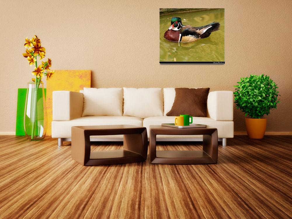 """""""Colorful Wood Duck&quot  by doncon402"""