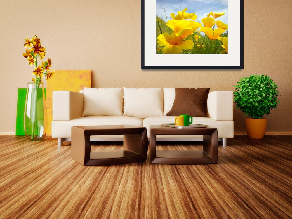 """Poppies art prints Orange California Poppy Flowers""  (2010) by BasleeTroutman"