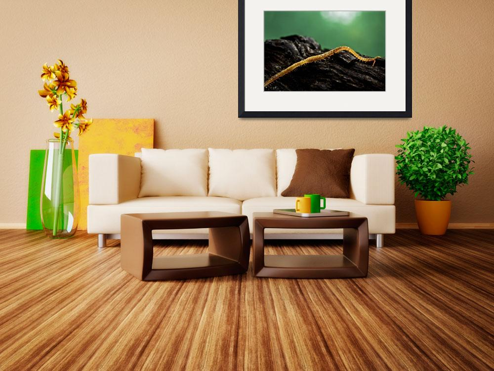 """""""SOIL CENTIPEDE&quot  (2010) by photographybyryankelly"""