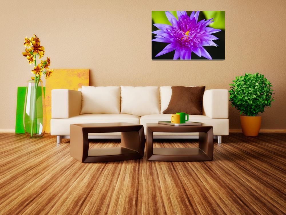 """Hawaii, Purple Lotus Blossum""  by DesignPics"
