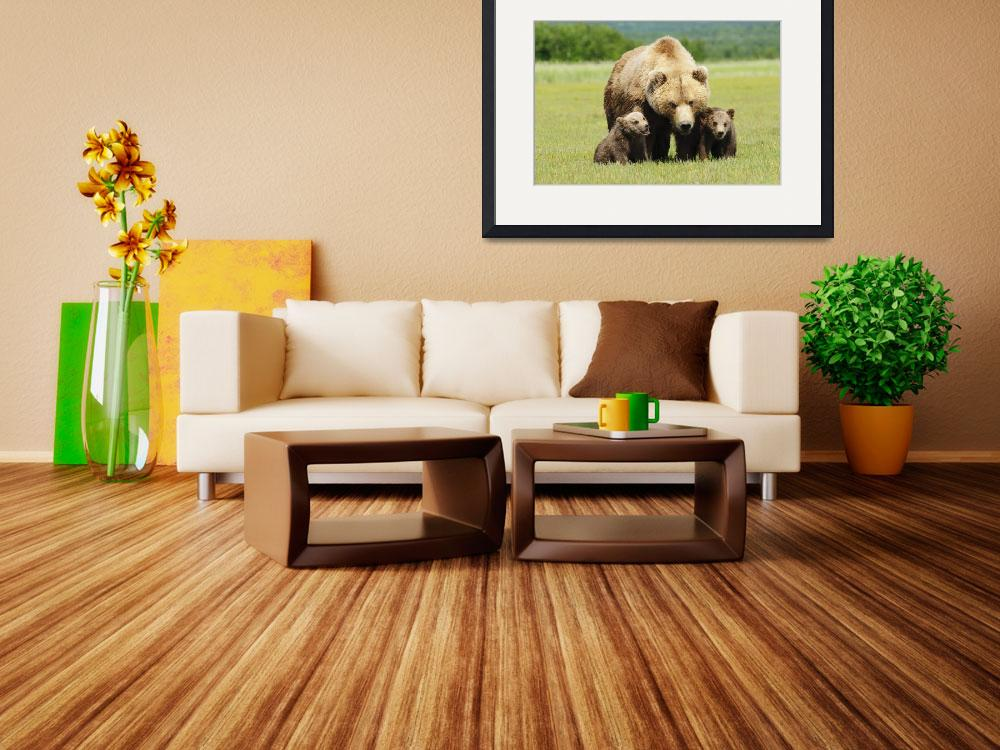 """""""A Brown Grizzly Bear With Cubs Alaska, United Sta&quot  by DesignPics"""
