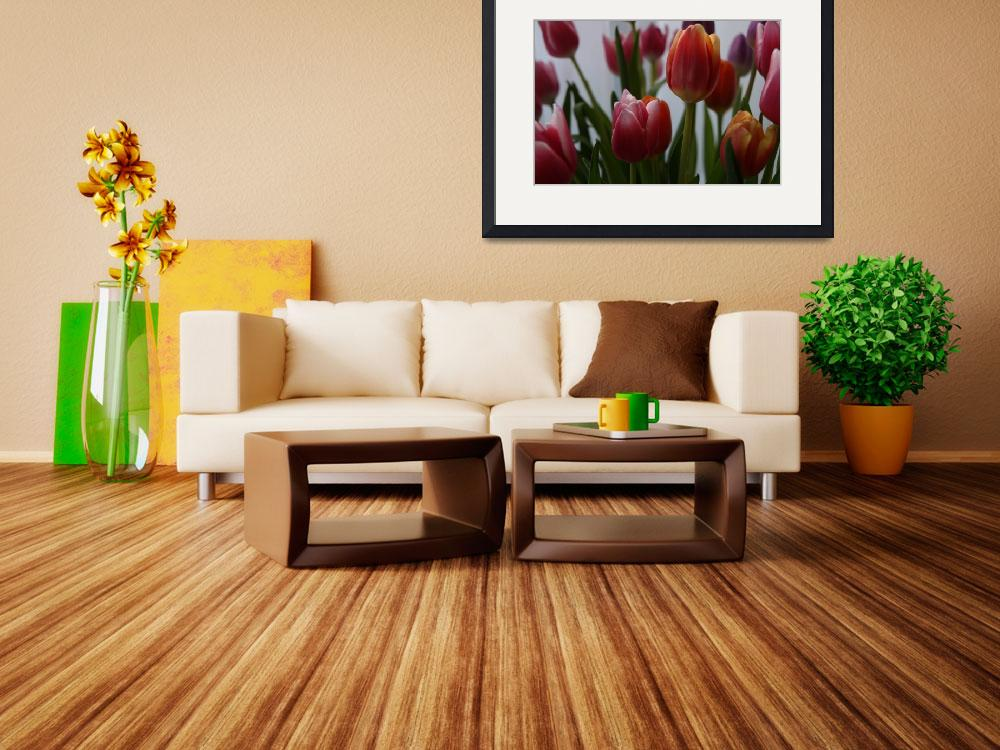 """""""tulips4&quot  by JSphotography"""