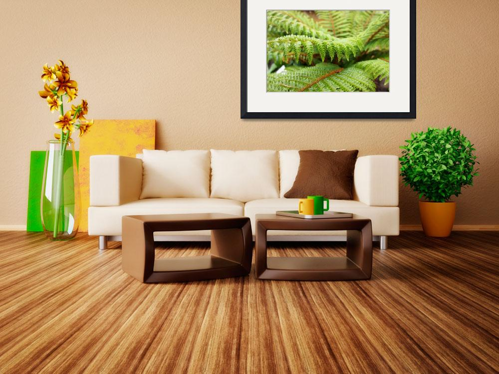 """Green Forest Fern Art Prints Ferns nature&quot  (2014) by BasleeTroutman"