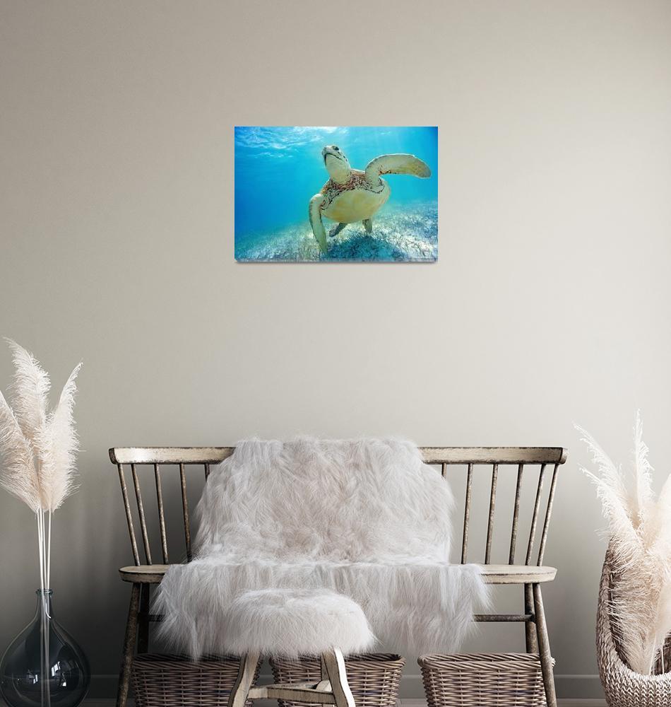 """""""Mexico, Yucatan Peninsula, Green Sea Turtle""""  by DesignPics"""