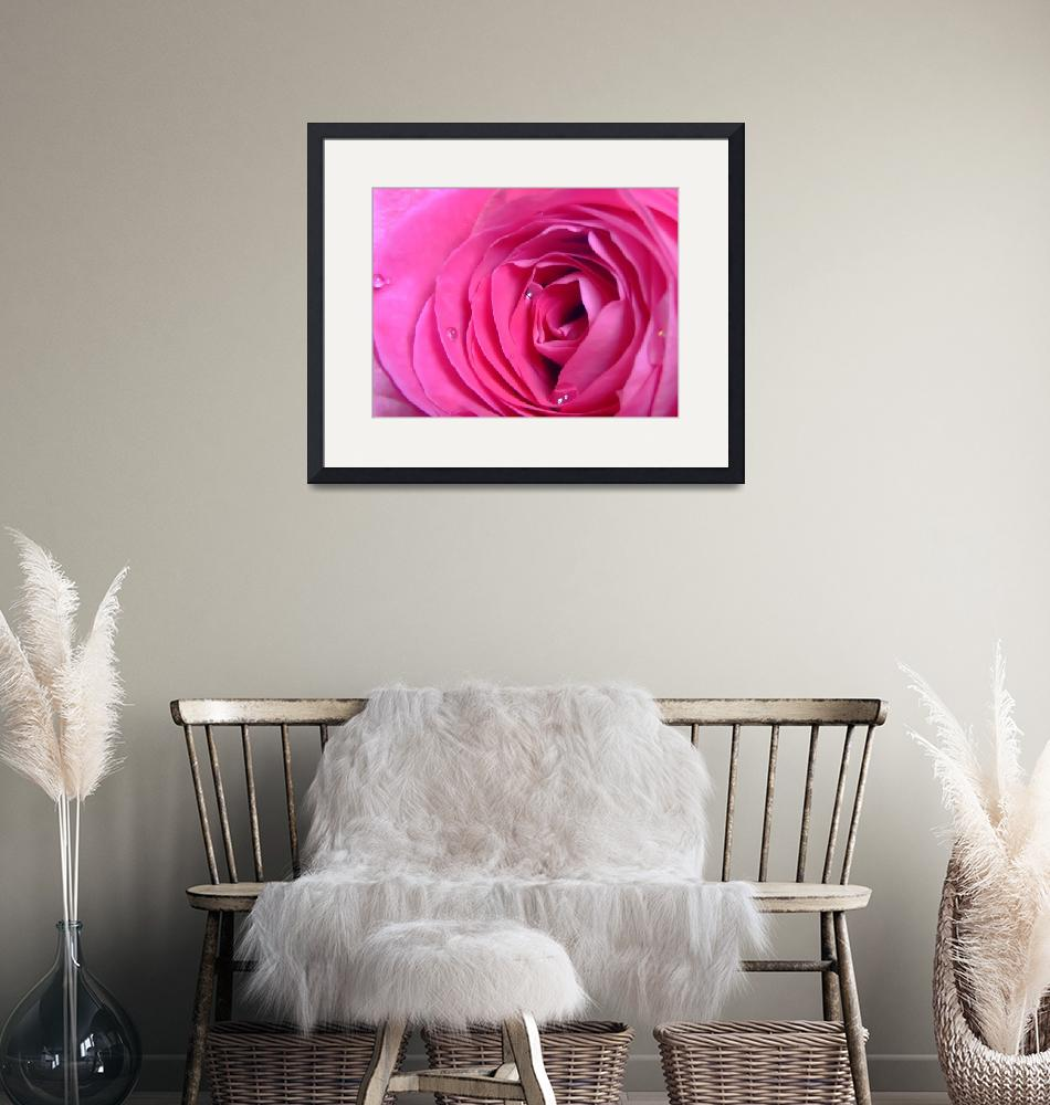 """""""Rose""""  (2009) by Hartphotography"""