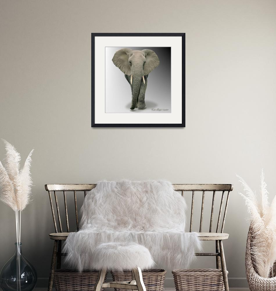 """""""African Elephant walking""""  (2009) by Major-Confusion"""