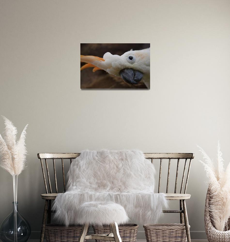"""Salmon Crested Cockatoo Cacatuidae Maui Hawaii""  (2011) by sharonmau"