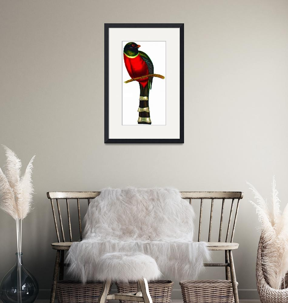 """Mountain Trogon (Trogon mexicanus)""  (2009) by markkumurto"
