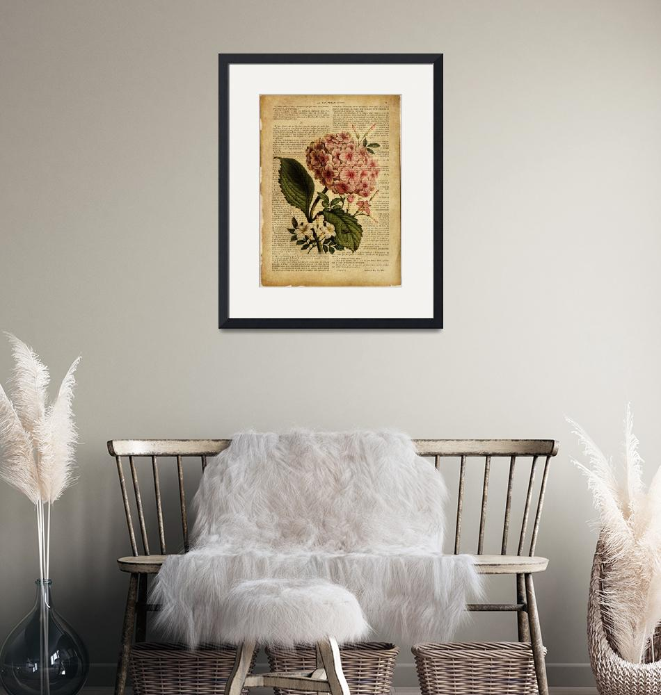 """""""old book page botanical print - Hydrangea""""  by Art_by_Lilia"""