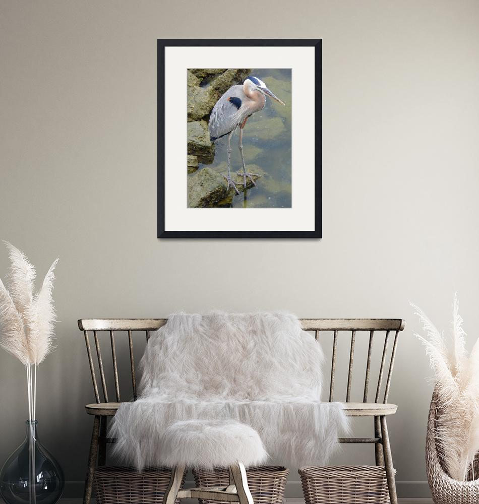 """""""Great Blue Heron"""" (2007) by stockphotos"""