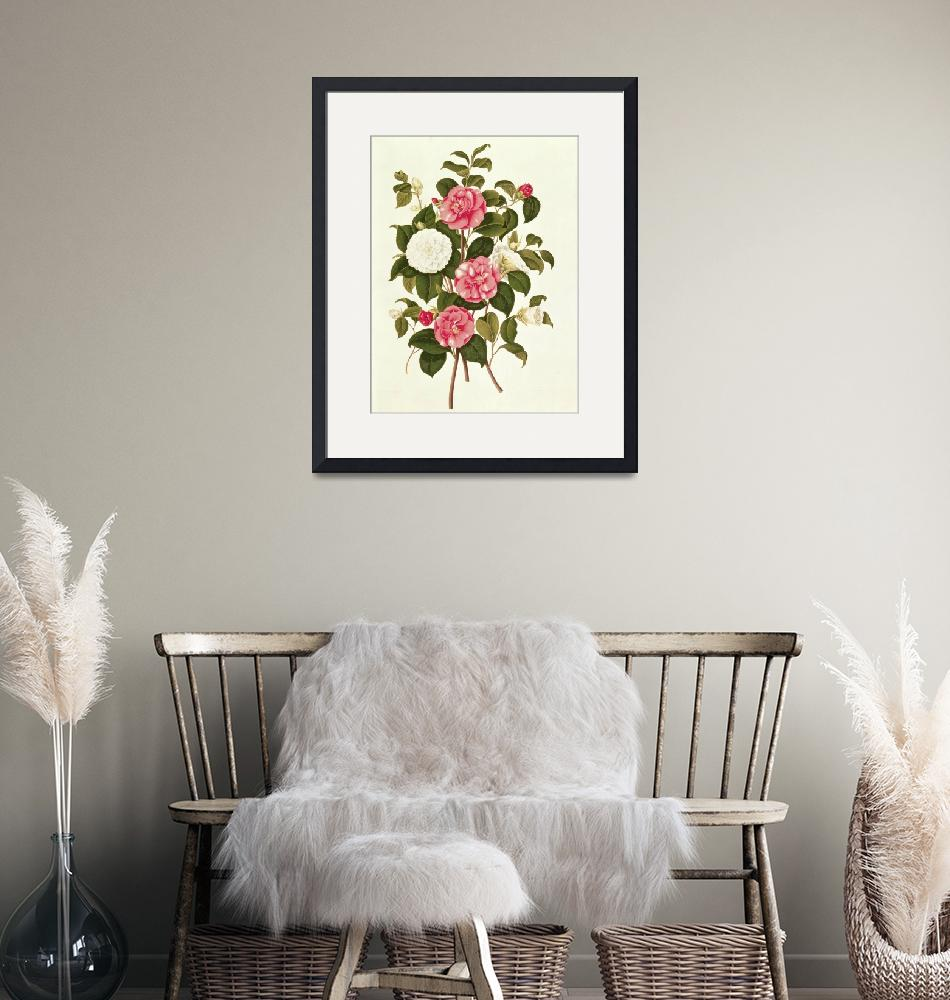 """""""Camellia""""  by fineartmasters"""