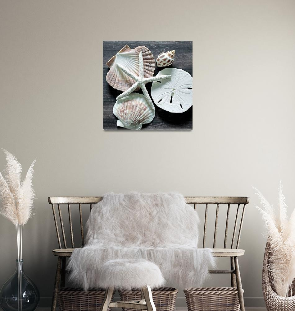 """ORL-5616-2 Seashells on Wood IX""  by Aneri"