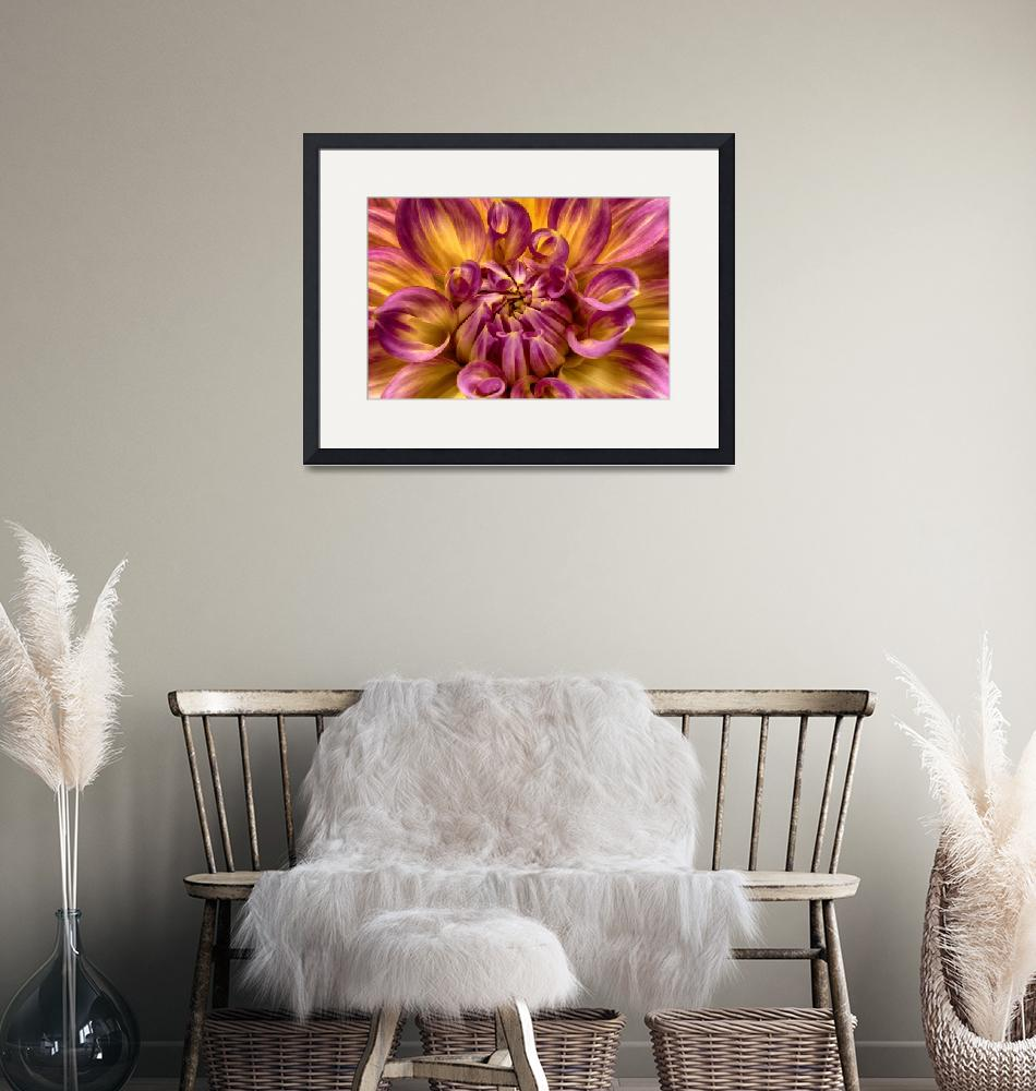 """""Brilliant Awakening"" Dahlia Flower""  (2013) by SoulfulPhotos"