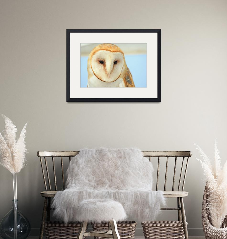 """Barn Owl""  (2008) by paulhood"