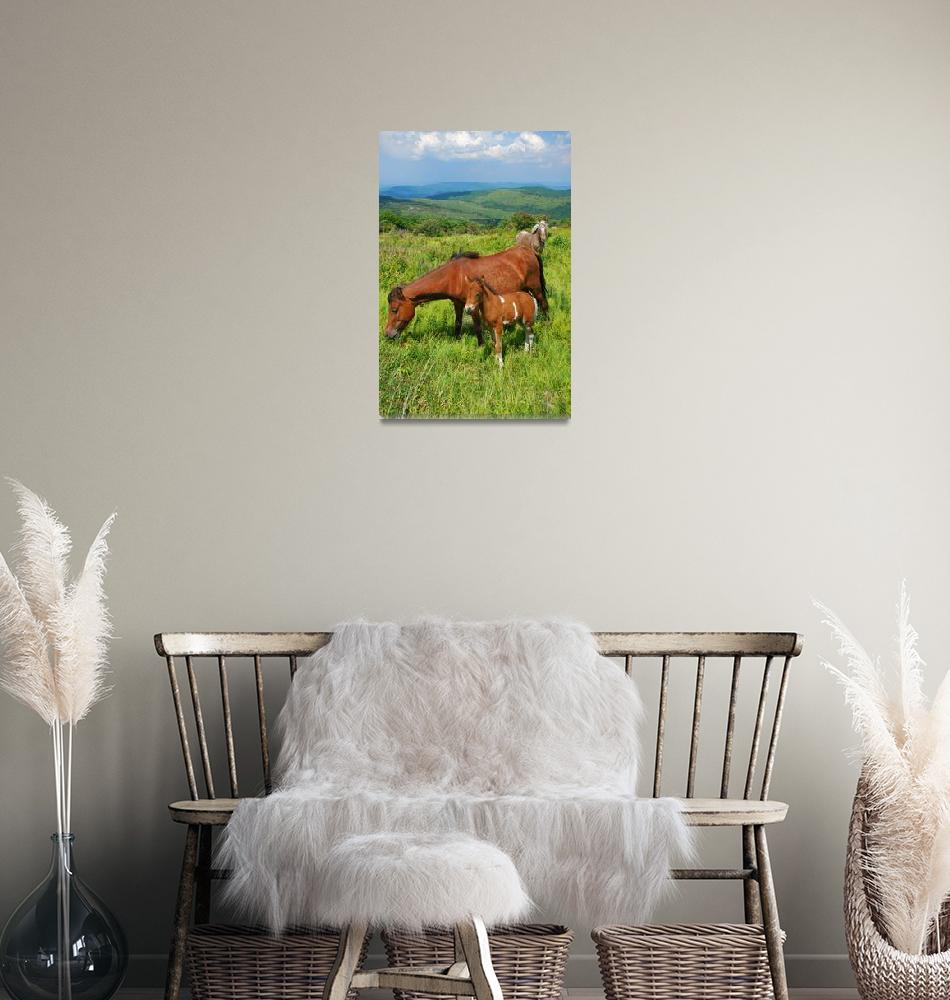 """Wild Ponies Mt. Rogers Grayson Highlands VA""  by toddbush"