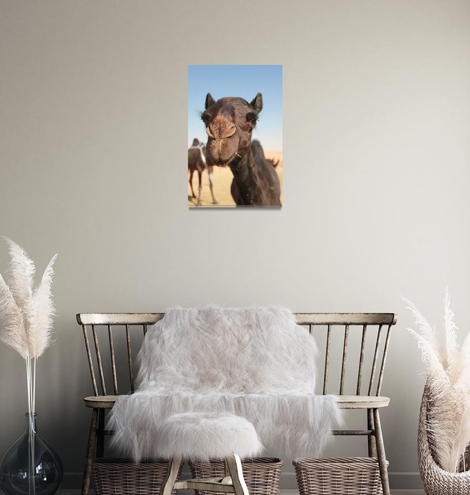 """Saudi Arabian desert black camel""  (2012) by belinda_baardsen"