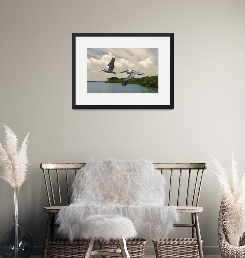 """Pelicans Crossing Tampa Bay""  (2018) by spadecaller"