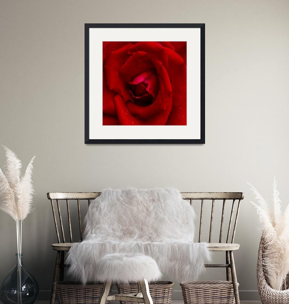 """""""True Beauty Is, In The Heart Of A Rose""""  (2007) by garlanddunston"""