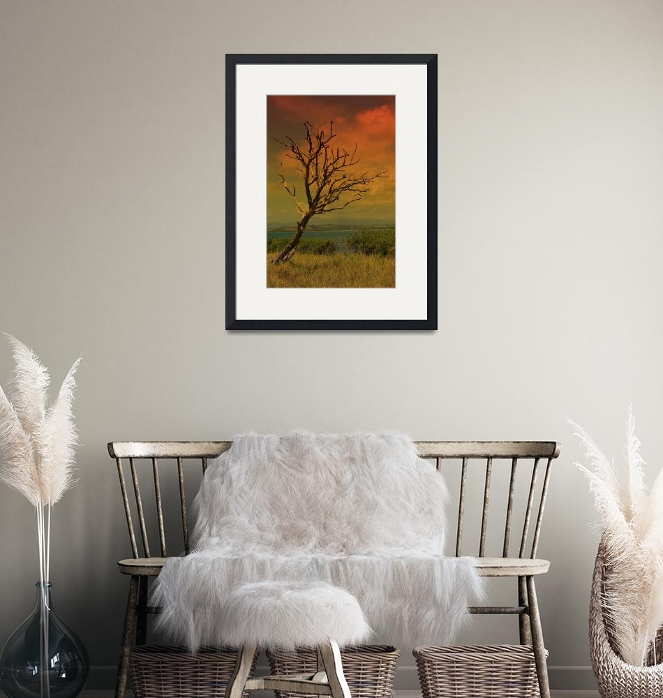 """""""Sunset Tree""""  (2011) by picsbytiff"""