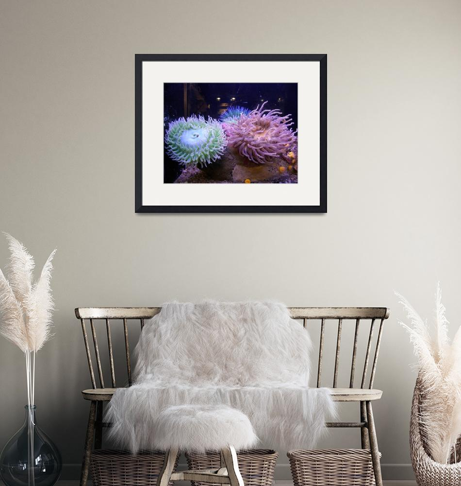 """""""Two Sea Anemones""""  by rgtmum"""