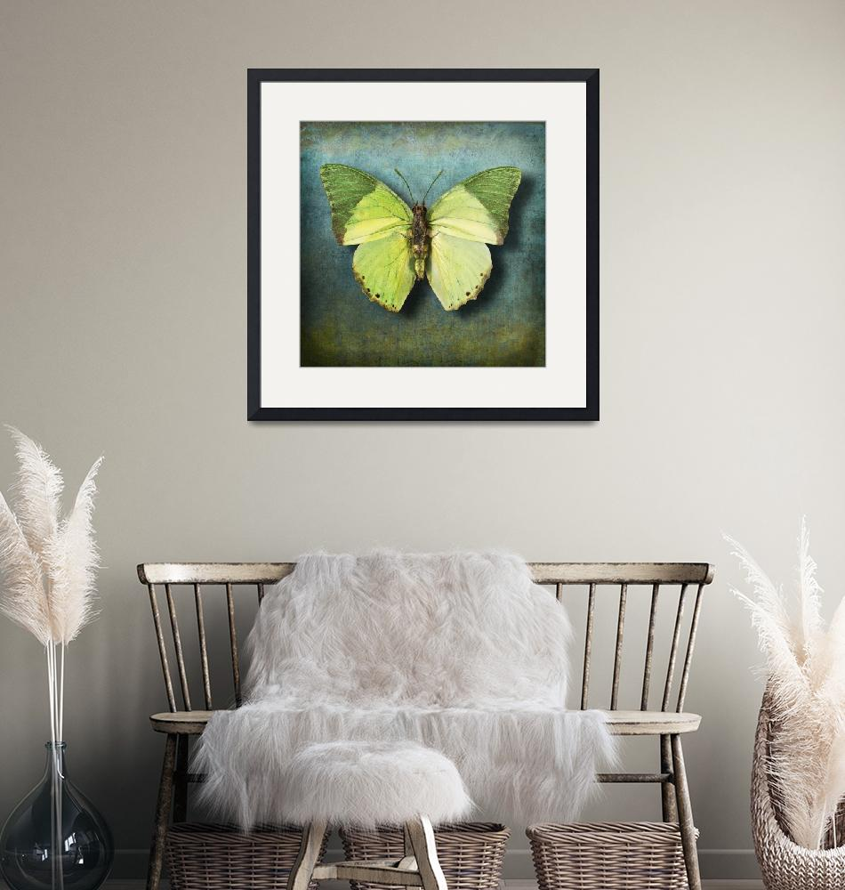 """""""Charaxes eupale Butterfly or African Mint Green""""  (2014) by vincent-field_photography"""