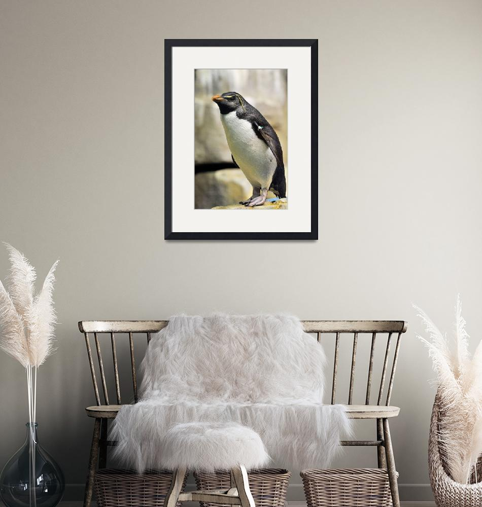 """""""Penguin on Rock""""  (2010) by domzwife"""