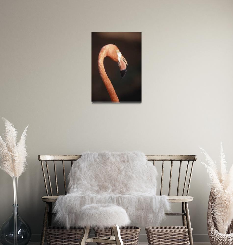 """""""Close-Up Of Flamingo, Barbados""""  by DesignPics"""