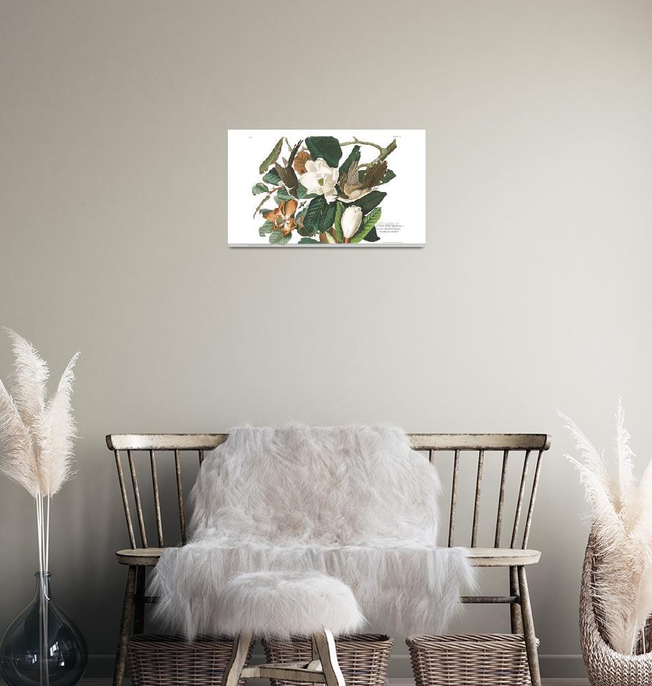"""Black Billed Cuckoo, Plate 32""  by FineArtClassics"