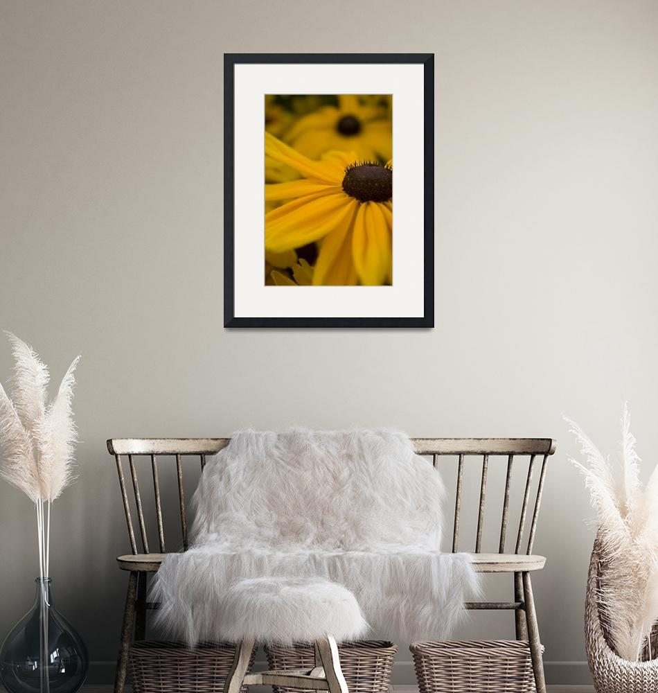 """Black-Eyed Susan - 2"" (2008) by TheNavigator"