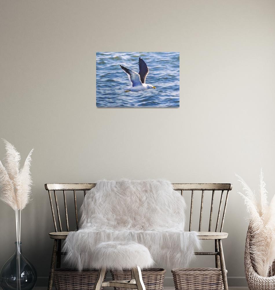 """Seagull Flying Over Sea, Montevideo, Uruguay""  (2020) by danfleitesart"