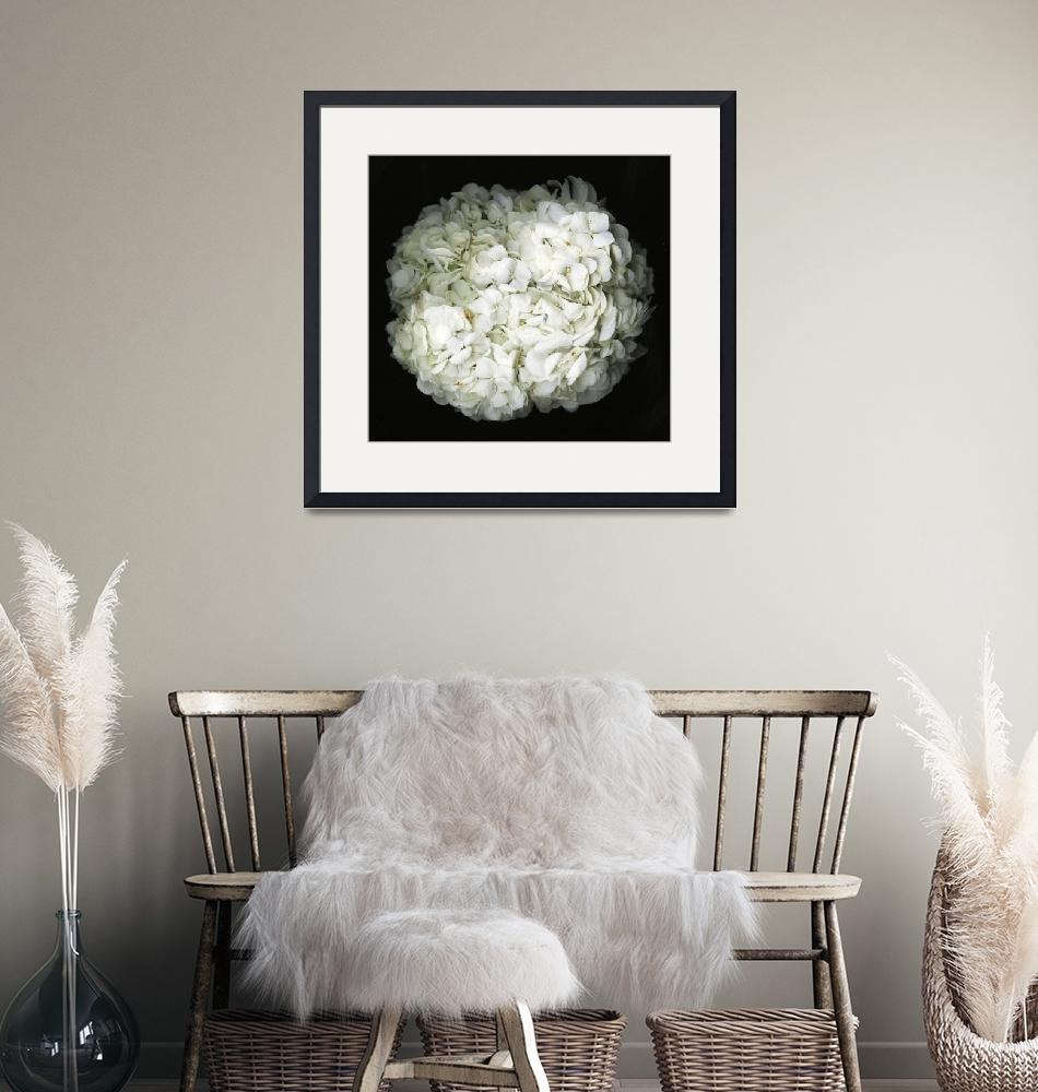 """Hydrangea- Black and white photography""  (2017) by modernhouseart"