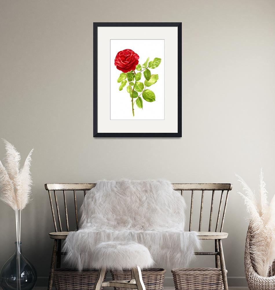 """Brilliant Red Rose on a Stem (white background)""  (2014) by Pacific-NW-Watercolors"