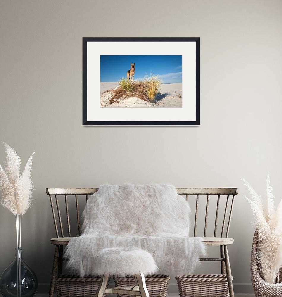 """""""Cody At White Sands, NM""""  by pbk"""