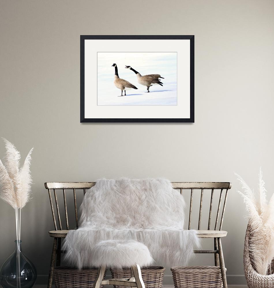 """""""Canada Goose - In Charge""""  (2011) by cameragal"""