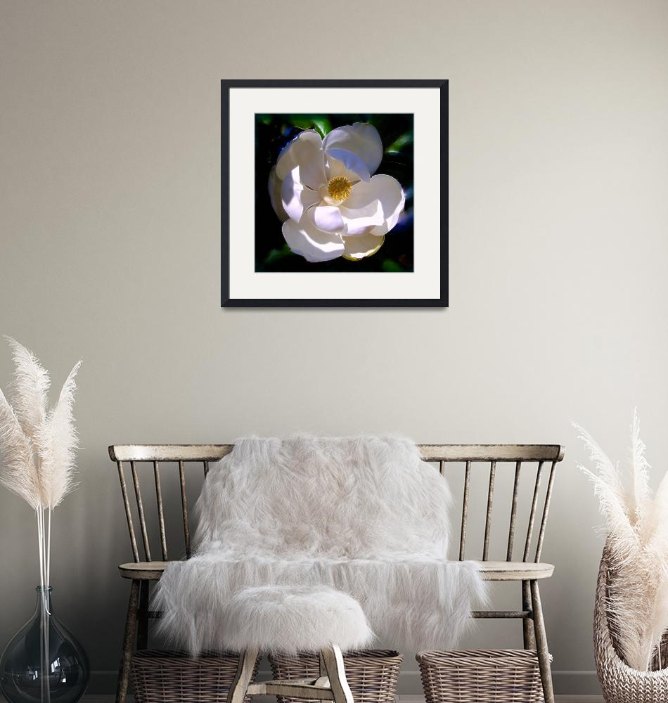 """""""Magnolia Two""""  (2008) by Artlife"""