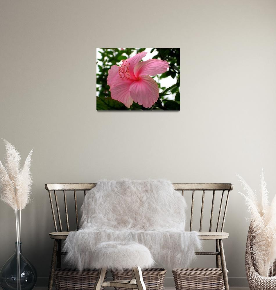 """Pink Flower, Ghana""  (2008) by cybergypsie"