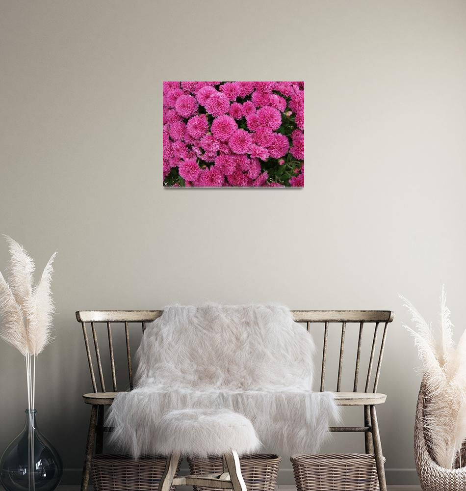 """""""Explosion of Pink""""  (2009) by TheMears"""