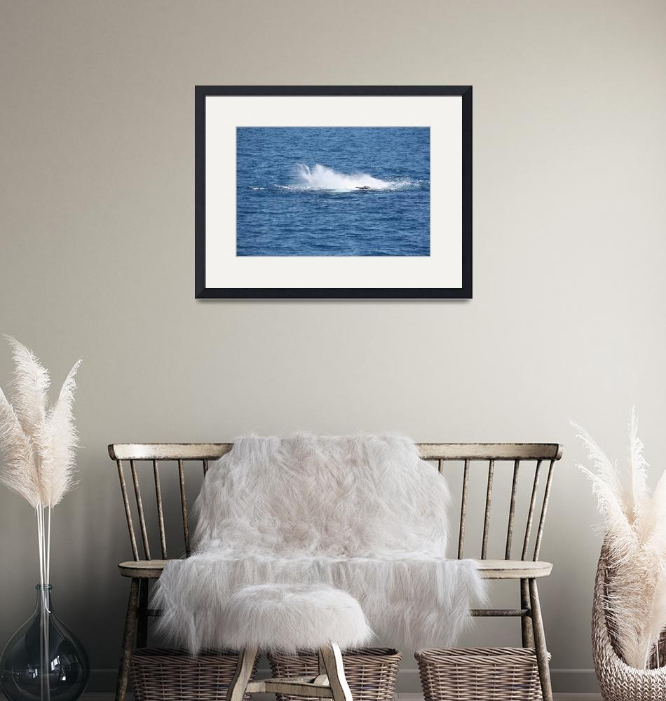 """""""NaP_ Whale Watching101""""  by nevilleprosser"""