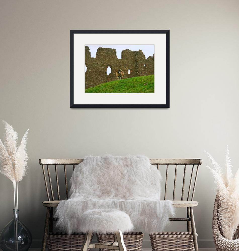 """""""Ram and Castle Wall, Wales, United Kingdom""""  by richdelmastro"""