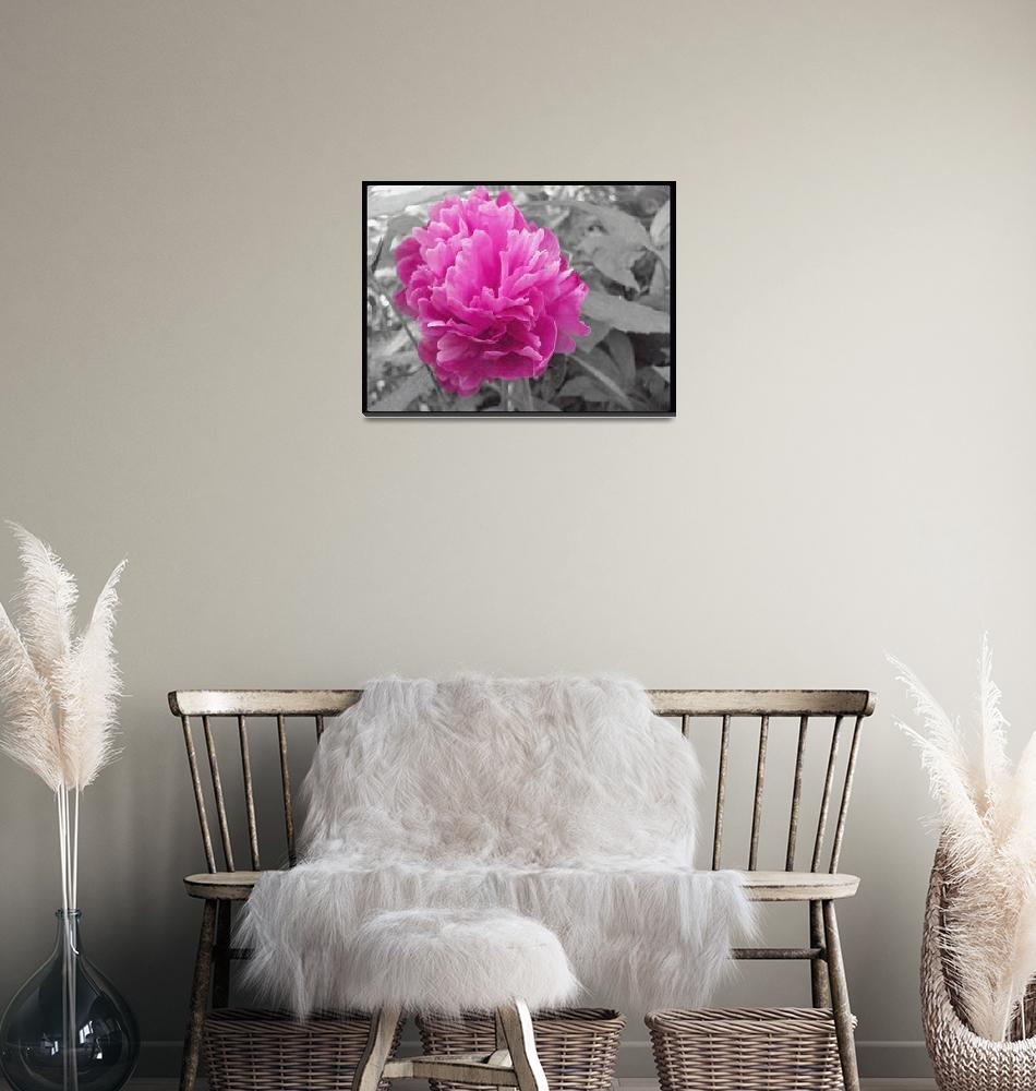 """""""Pink Peony""""  (2012) by MissDawn"""