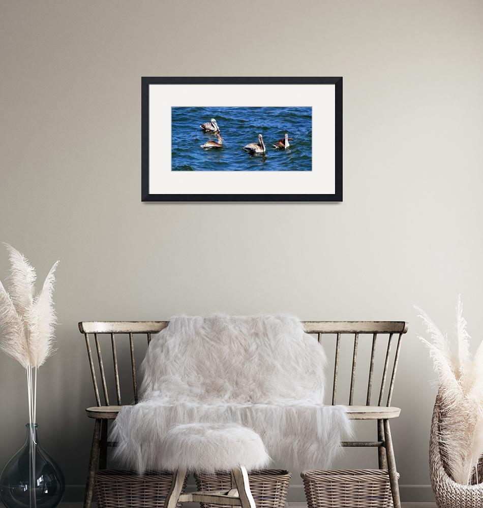 """""""Pelicans off the South Carolina Coast""""  (2010) by GinetteCallaway"""