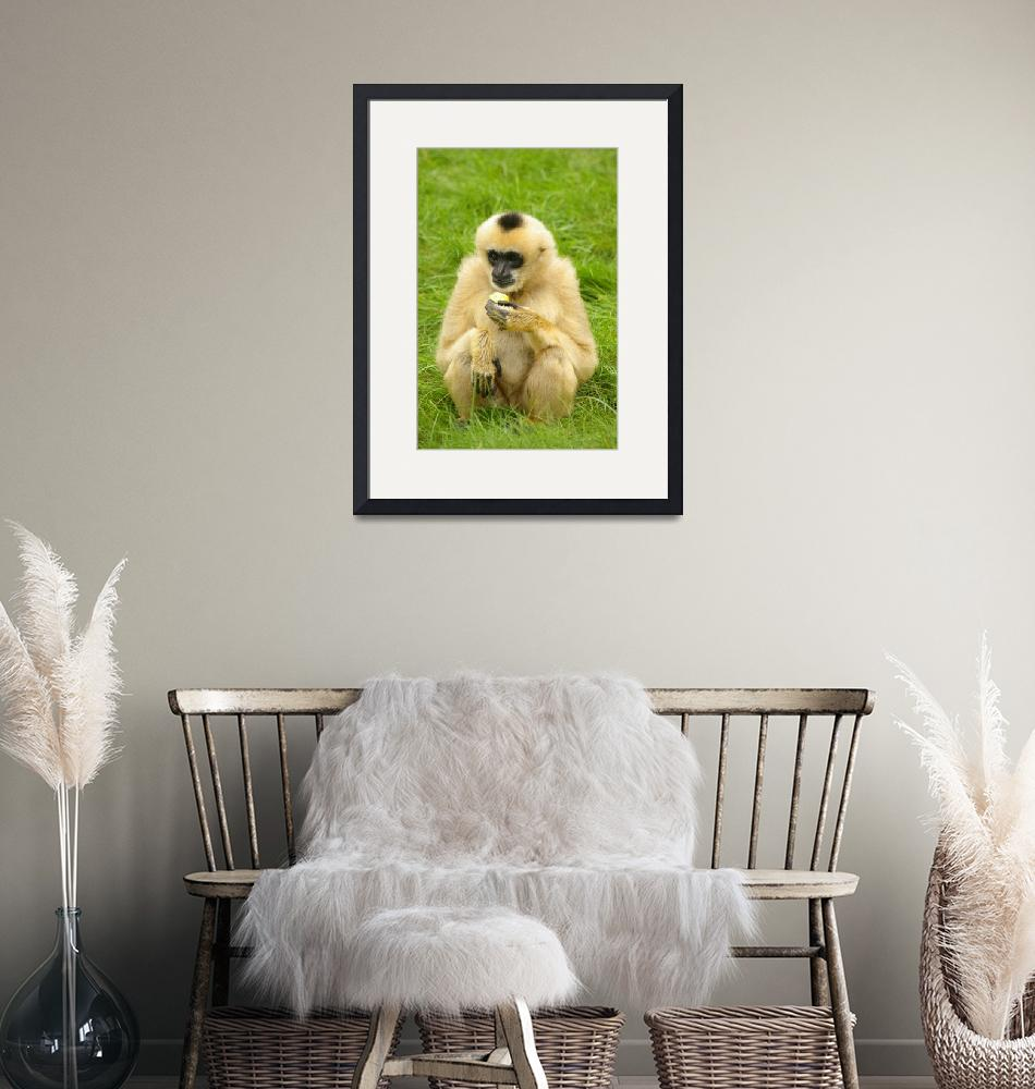 """""""Nothern white-cheeked gibbon""""  (2010) by mellting"""