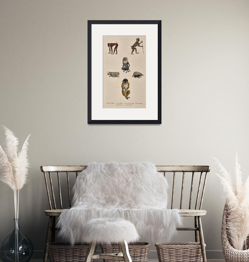 """""""Harrison & Co.~Untitled (baboons)"""" by Old_master"""