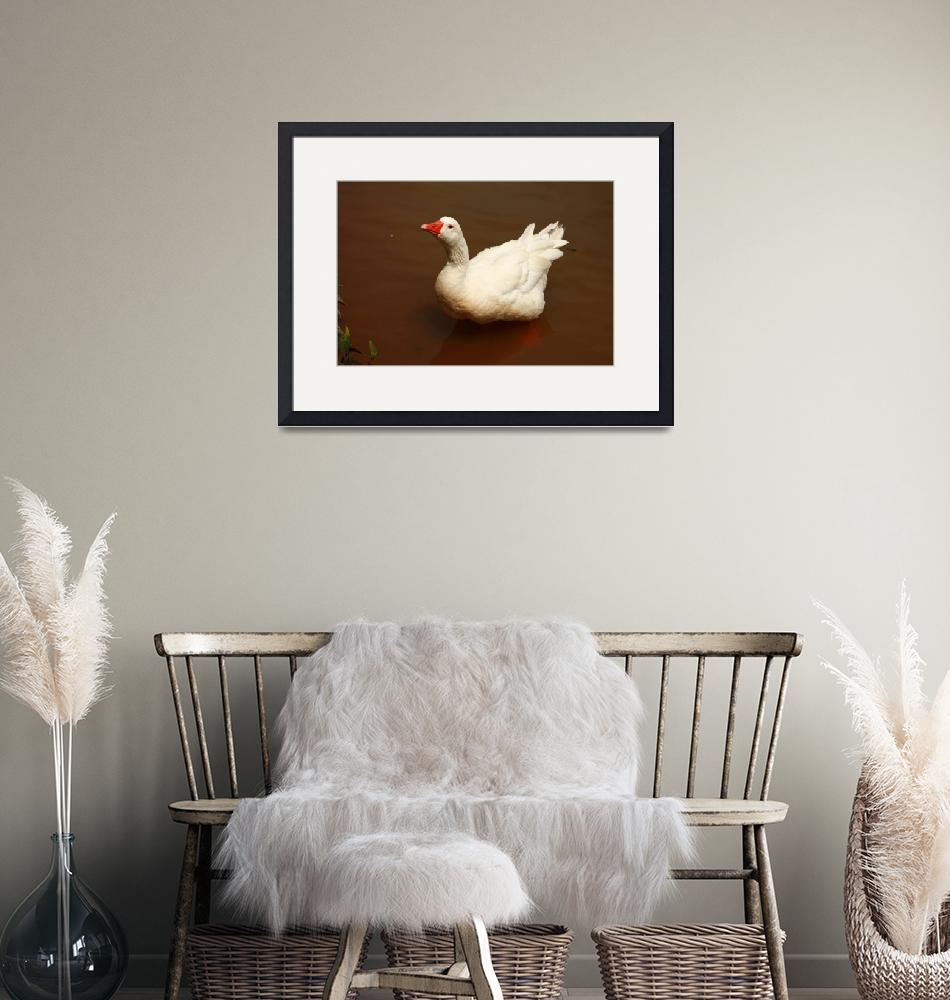 """""""White Goose Ruffled Up""""  (2013) by coopercreekparkphoto"""